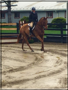 Handsome and Lee at West Milford Equestrian Center, New Jersey